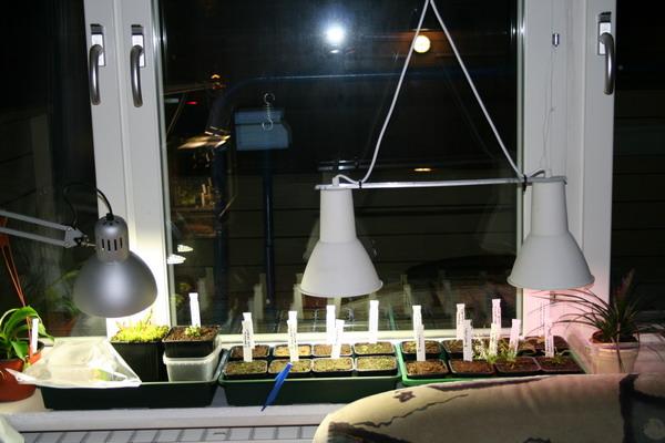 vollspektrum energiesparlampe zubeh r f r karnivoren gesellschaft f r fleischfressende. Black Bedroom Furniture Sets. Home Design Ideas