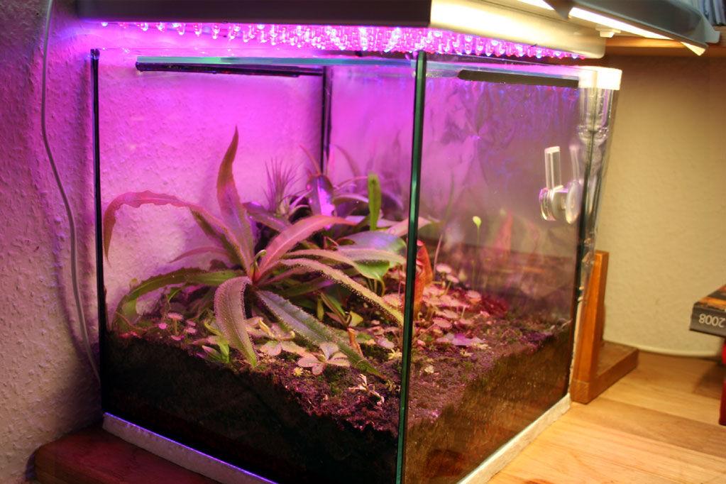 led beleuchtung seite 13 zubeh r f r karnivoren gesellschaft f r fleischfressende pflanzen. Black Bedroom Furniture Sets. Home Design Ideas