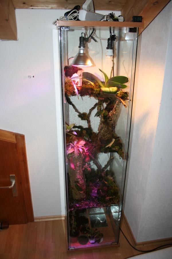 Led Beleuchtung Orchideen : Karnivoren und Orchideen Vitrine  Nepenthes  Gesellschaft f?r