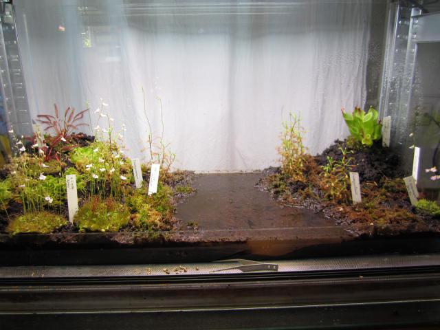 terrarium mit schlenke kulturformen und methoden gesellschaft f r fleischfressende pflanzen. Black Bedroom Furniture Sets. Home Design Ideas