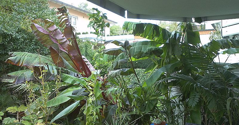 dies und das ein paar andere pflanzen aus meinem garten. Black Bedroom Furniture Sets. Home Design Ideas