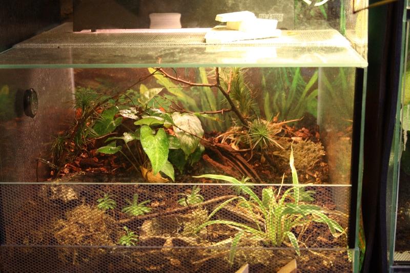 Aquarium Als Terrarium Verwenden : Aquarium als terra l?fter notwendig kulturformen und