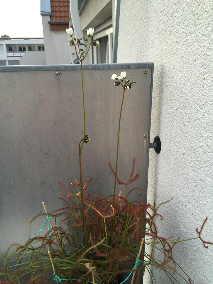 post-4353-0-18230300-1440009392_thumb.jp