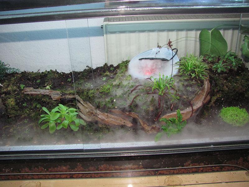 mein terrarium moork bel karnivoren fotos gesellschaft f r fleischfressende pflanzen e v. Black Bedroom Furniture Sets. Home Design Ideas