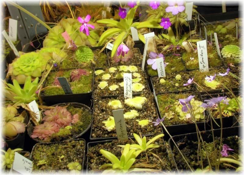 56a3b5d793d7e_Salatplantage2.thumb.jpg.c