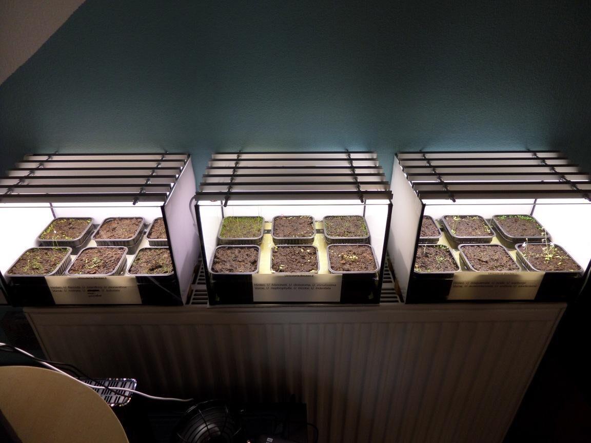 Utricularia-Becken-Gesamtansicht.jpg