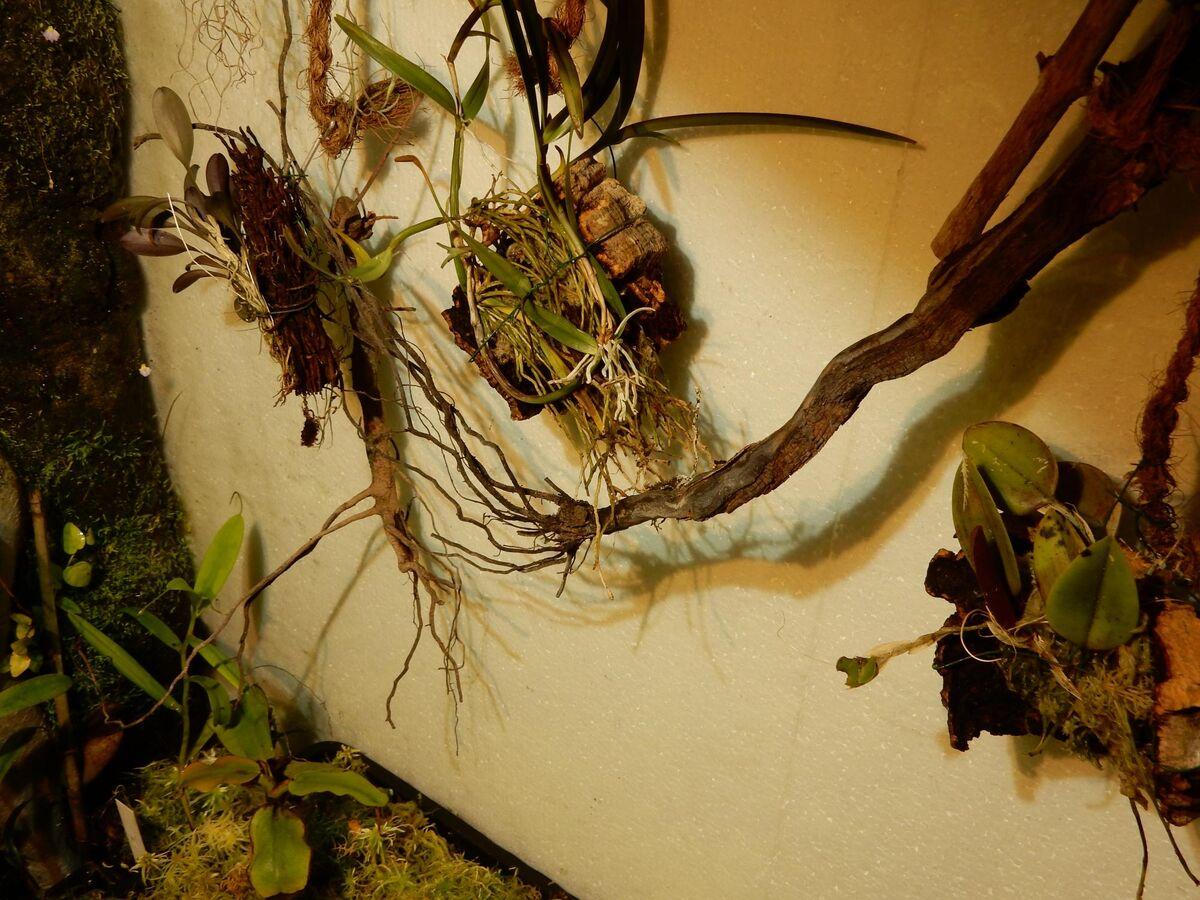Orchideen (3).JPG