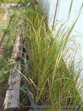 Carexhaltung.jpg.064338c8ce791536b474677aa13e580a.jpg