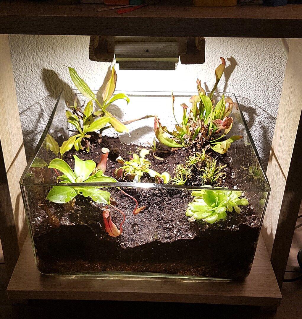 led beleuchtung seite 14 zubeh r f r karnivoren gesellschaft f r fleischfressende pflanzen. Black Bedroom Furniture Sets. Home Design Ideas