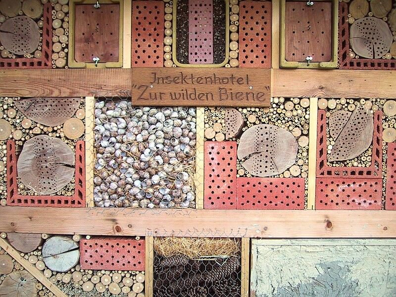 Insektenhotel05_4335.thumb.jpg.dbdd90ae4220c3ef8dbeb00c332983df.jpg