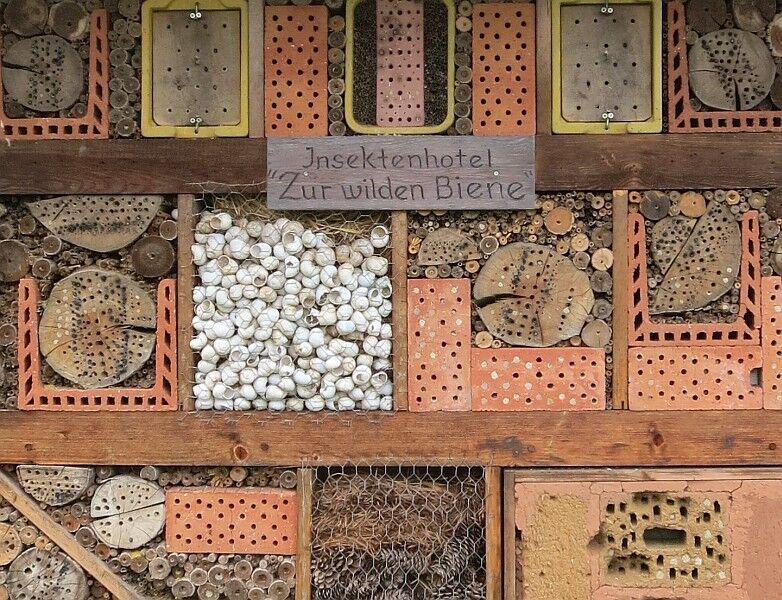 Insektenhotel14x_3423.thumb.jpg.2d5072f3ecfe8dd849947c6b7f37ba1d.jpg