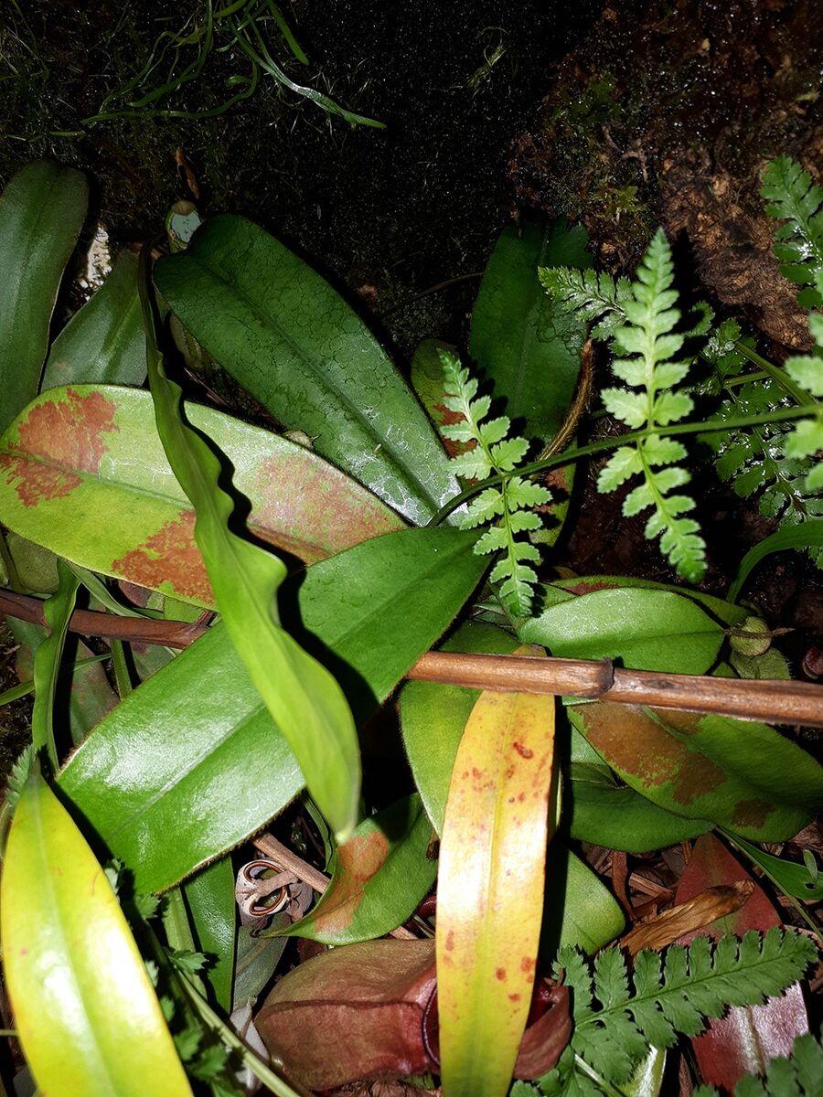 Mutterpflanze.thumb.jpg.f948925a64b7d55689594253a5aba666.jpg