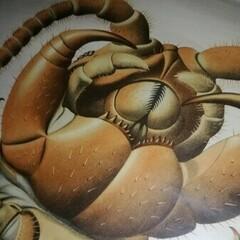 Myriopodex